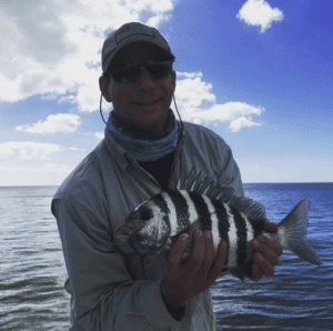 angler holding a fresh caught naples area sheepshead, aka convict fish